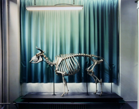 AnimalLogic11b