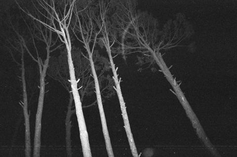 trees-lo