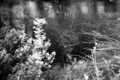 woods1-lo