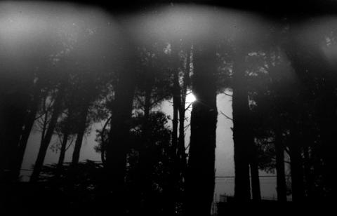 woods4-lo
