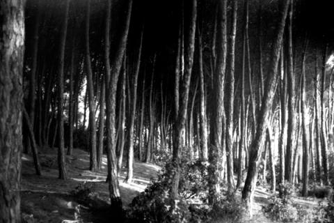 woods6-lo