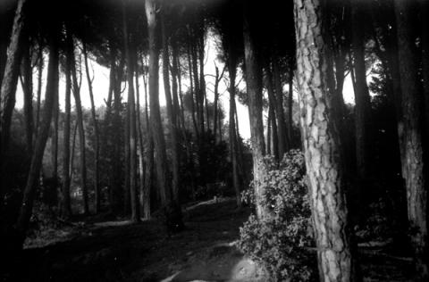 woods7-lo